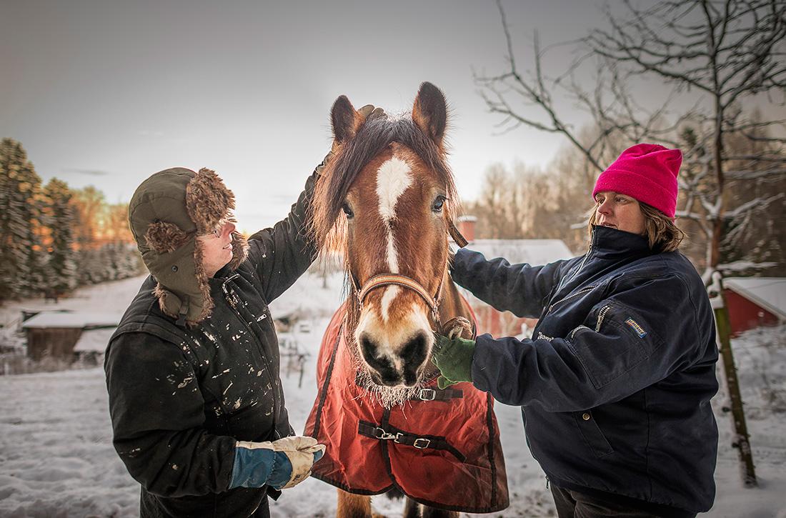 """När Anita skadade sig tänkte hon att hon måste göra sig av med sina två hästar. """"Men det gick inte. Vad skulle jag då ha att kämpa och leva för?"""" Hästarna är det som ger Anita energi och återhämtning. Hon får hjälp av sin syster Gunilla att sköta dem. Foto: David Lundmark."""