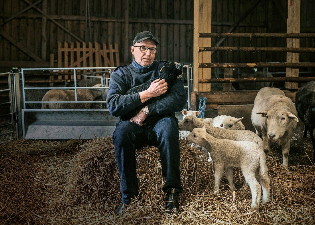 Ola Dahlgren håller i årets sjunde lamm, bara en vecka gammalt. Djuren får inga namn längre. De är för många. Foto: David Lundmark