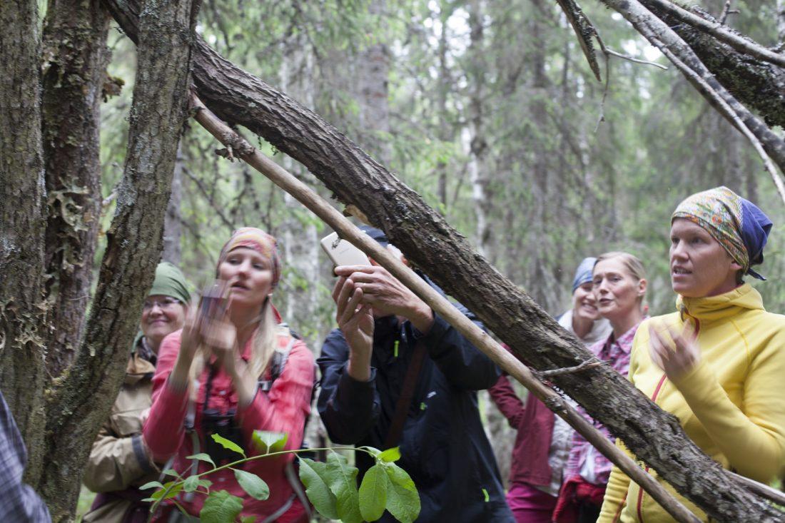 I den skyddade skogen hittas en ovanlig doftticka på en död trädstam. Foto: Marie Edholm