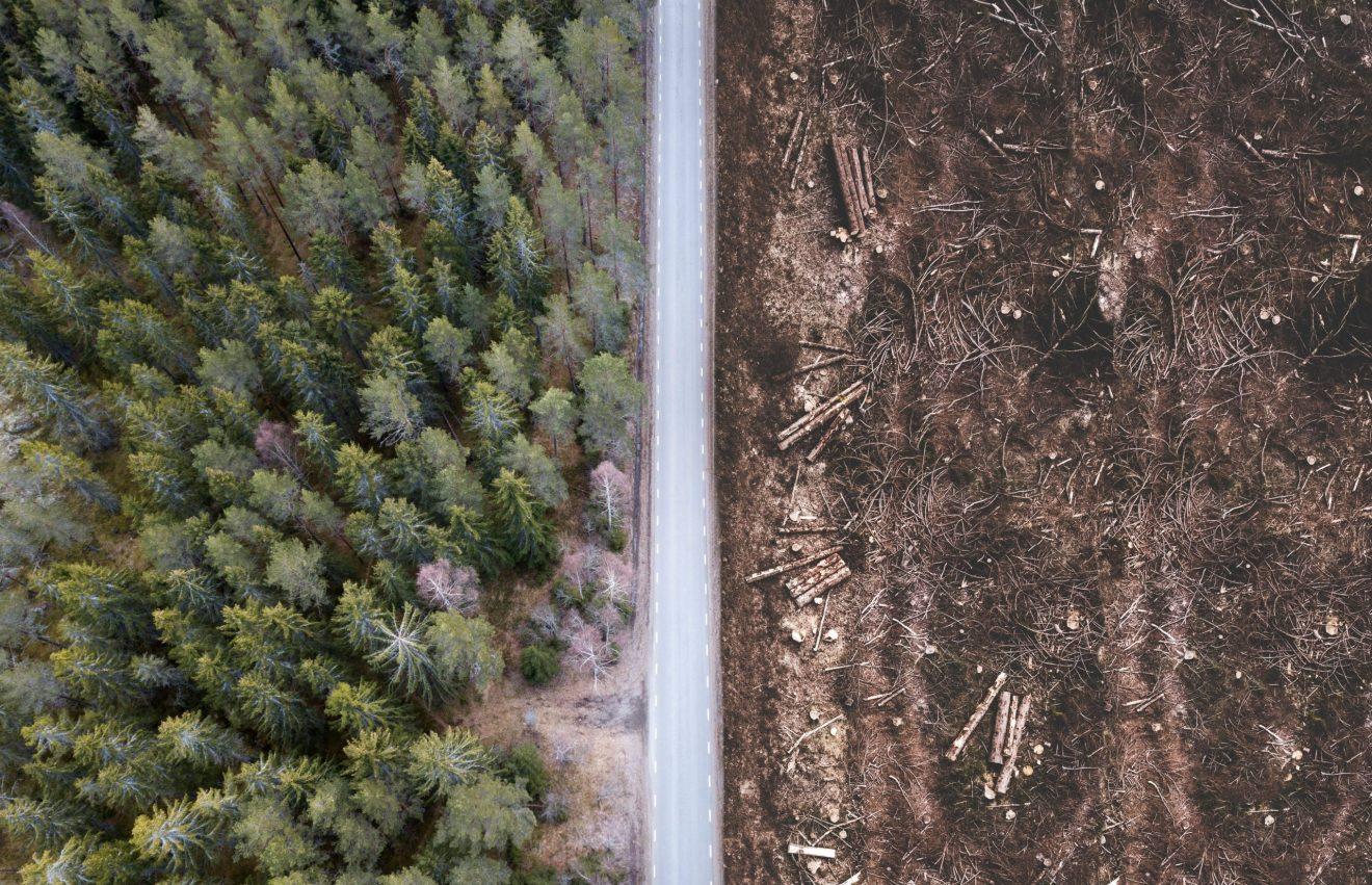 Tio centrala frågor i det svenska skogsbruket
