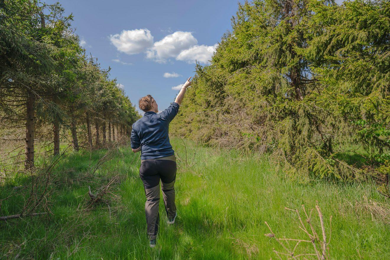 Här maxas fröna som ska ge mer skog