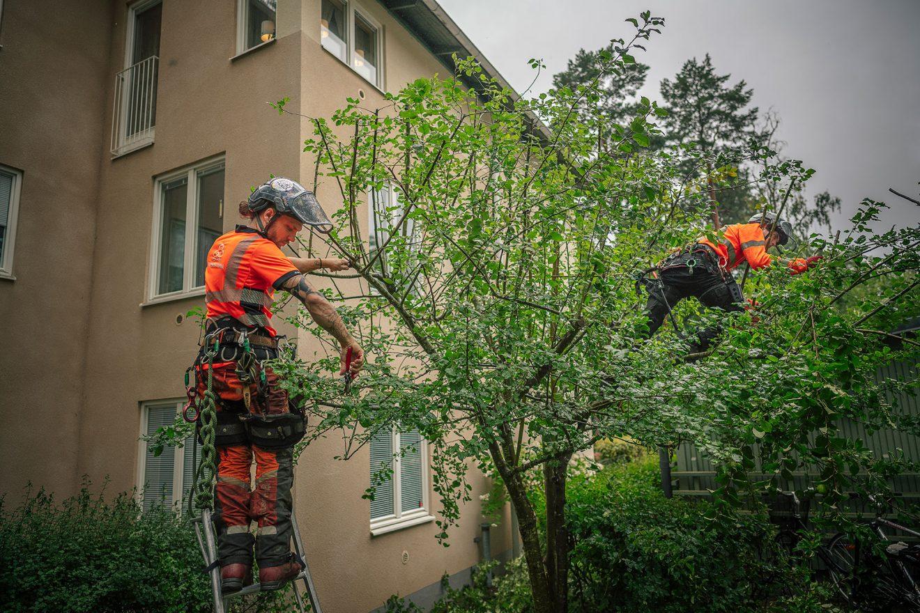 Så får du träden att må bra