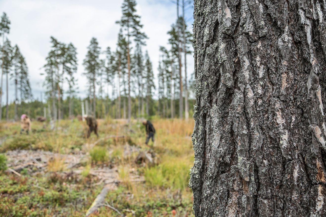 Fusk med löner i skogen