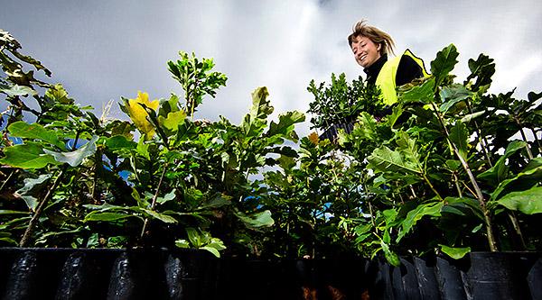 Ida Karlsson, marknadsansvarig för Södras skogsplantor. Foto: SÖRAN HÅKANLIND
