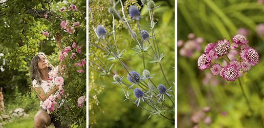 Magdalena Warkander vill att trädgården ska förändras, aldrig bli riktigt klar. I mitten blå martorn och till vänster den lättodlade stjärnflockan. Foto: DANIEL ROOS